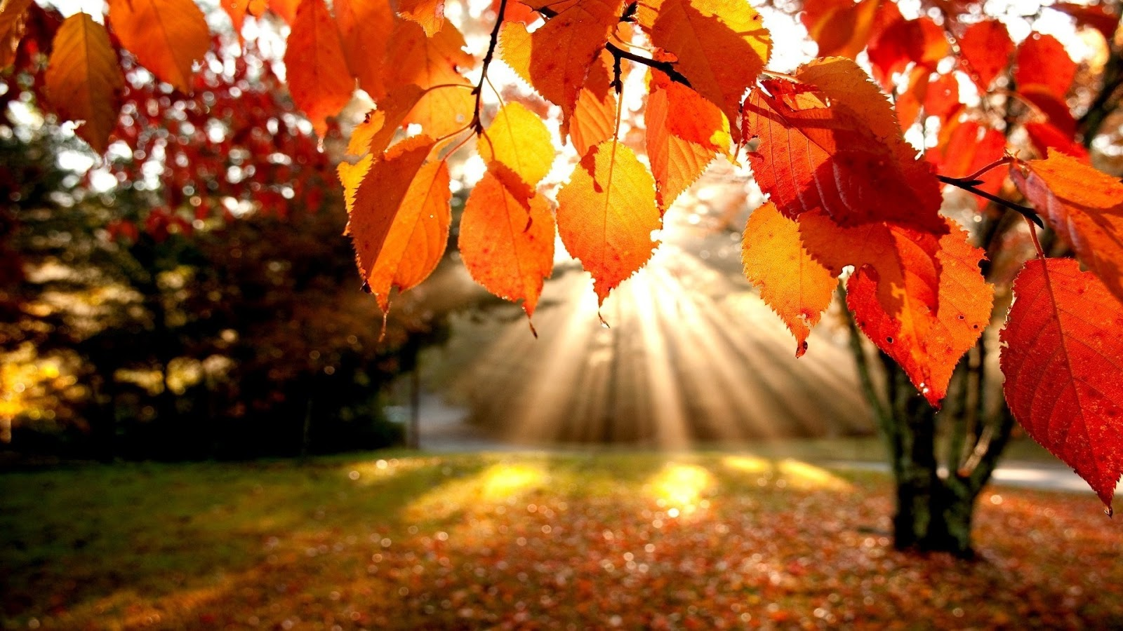 Autumn Leaves in sunshine